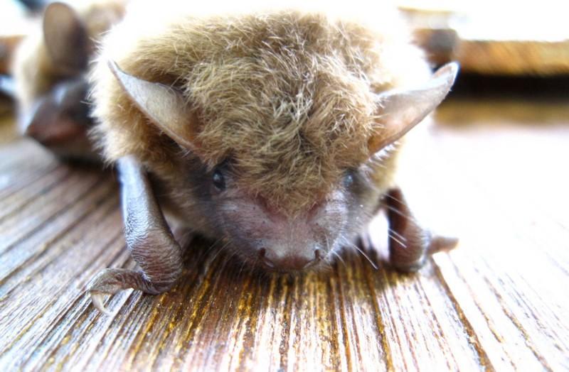Bat Removal 4
