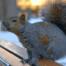 Squirrel Removal 1
