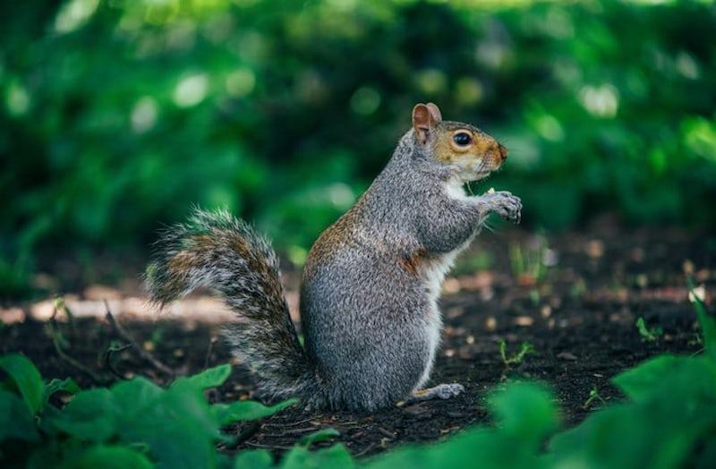 Squirrel Removal 3