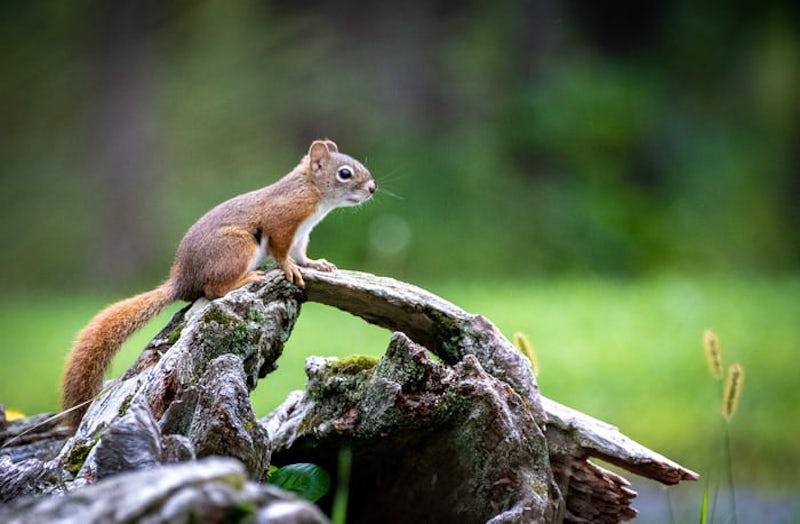 Squirrel Removal 5