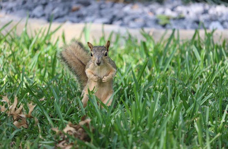 Squirrel Removal 4