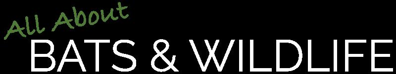 AA Bats & Wildlife Logo